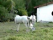 Brazilian Cowboys