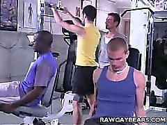 Muscle Bound Bear Hook Up