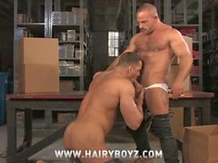 Hairy muscled gay bears erik rhodes and samuel colt anal ramming